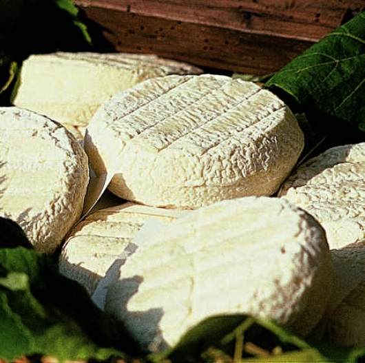Toma cheese from Piemonte