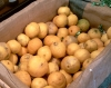 Bergamot fruits form Calabria