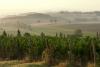 Nobile di Montepulciano Wine Road